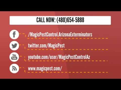 Magic Pest Termite Control Gilbert AZ