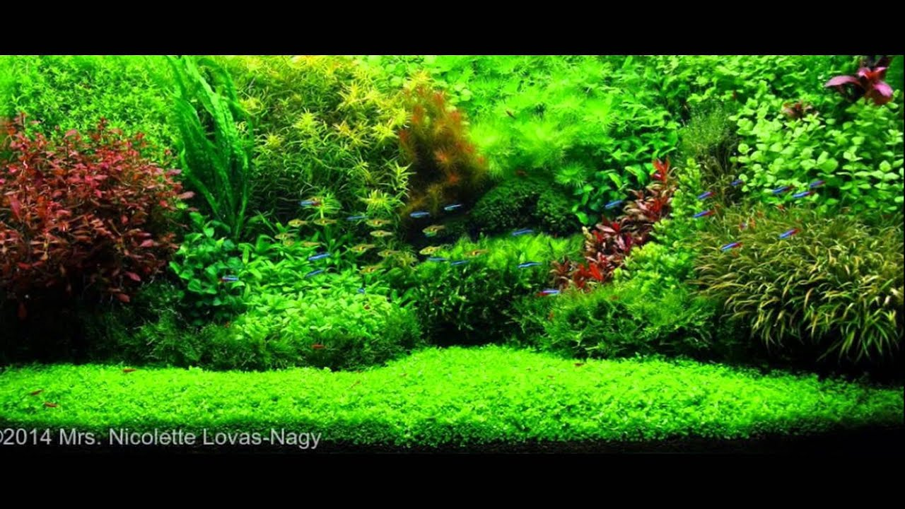 Delightful Aquascaping 2015