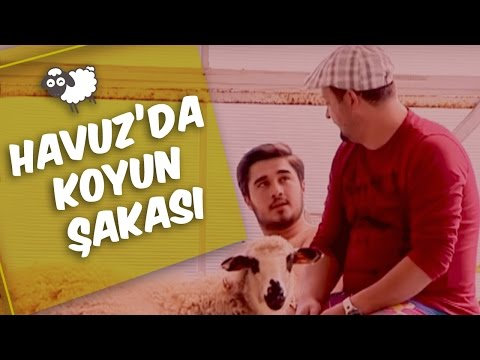 Mustafa Karadeniz - Havuz Başında Koyun Şakası