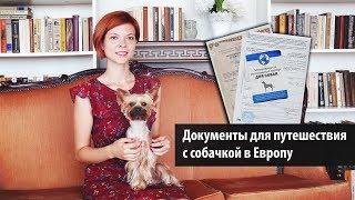 Документы для вывоза собаки в Европу  / Woof travel — путешествия с собакой на машине