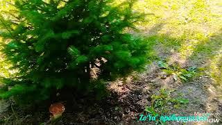 Деревенский ВЛОГ/Установили септик на участке/Рецепт малосольных огурцов #септик #влог