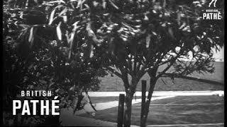 Transforming The Camargue (1967)