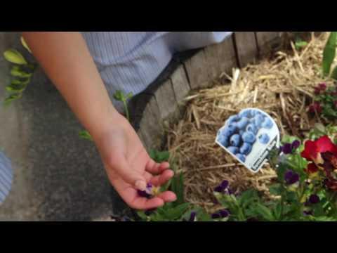 Nature Nurture Education Campaign