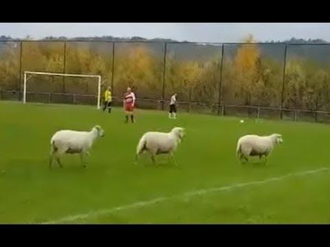 Quand tu joues en District (Football Amateur Episode 36)