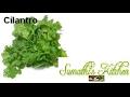 How to store tips for  cilantro & herbs in fridge,கொத்தமல்லி வாடாமல் இருக்க டிப்ஸ்  -  Eng subtitle