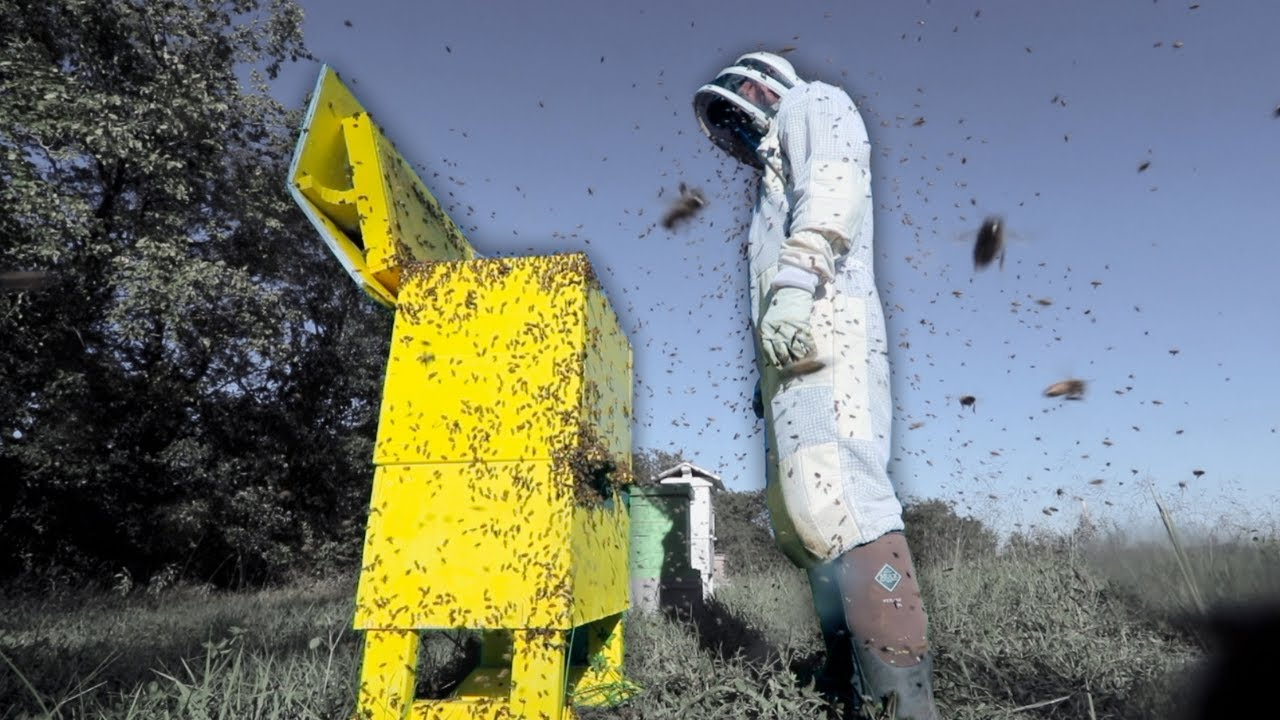 The day I destroyed the yellow hive.