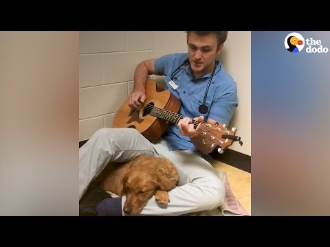 Vet Sings To Puppy to Comfort Dog | The Dodo