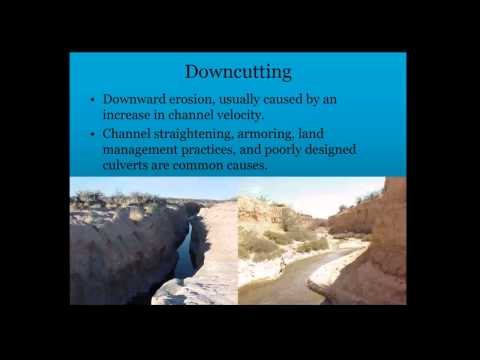 Stream Processes and Riparian Function: Presented by Ryan McGillicuddy