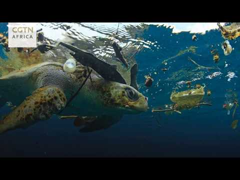Securing The Future For Sea Turtles
