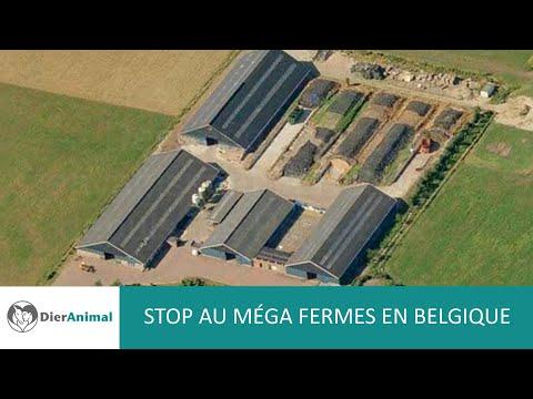DierAnimal - Stop Méga fermes Belgique