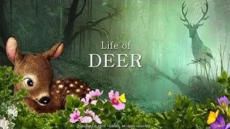 Life of  Deer - Dani HASST Rehe!