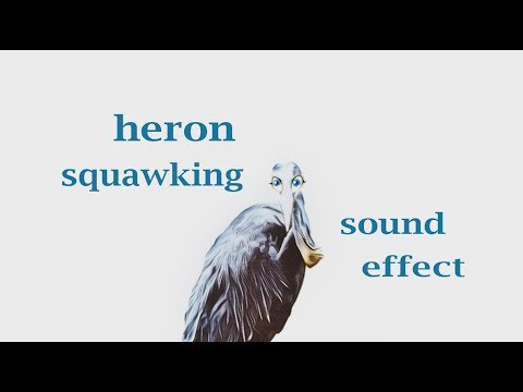 How A Heron  Squawking - Sound Effect - Animation