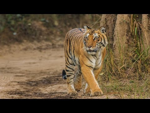 Top 10 Tiger Reserves in India With Maximum Tiger Population