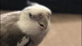 cute parrot videos