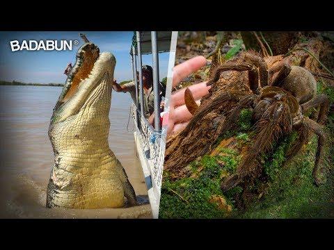 9 Animales gigantes que te harán sentir como una cucaracha