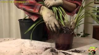 Giardinaggio-orchidee