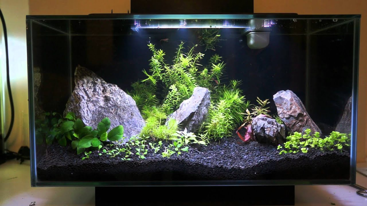 Fluval Edge 6 Gallons Added Plants Had Enough Of The