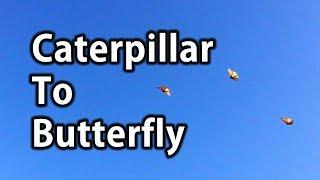 Caterpillar To Butterfly | Tip Of The Day | Dr. Robert Cassar