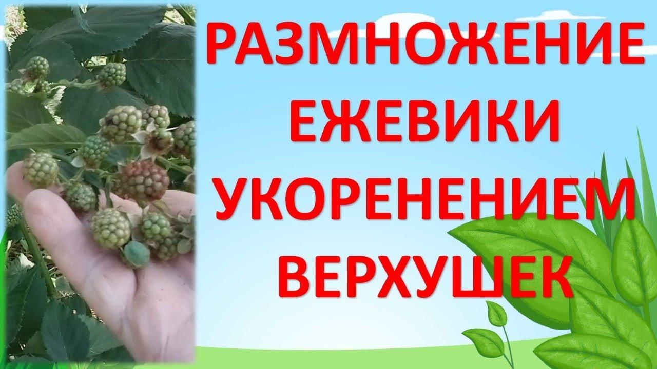 Где купить искусственное дерево оптом и в розницу?. Заказать искусственные цветы и напольные декоративные комнатные деревья в горшках недорого можно в интернет-магазине. Деревья, кусты, пальмы. По цвету: ✕. Полынь артикул: tre-13-3880. Цена: 2100 руб. Высота: 100 см. Шт. Добавить в.