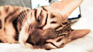 Cat Lady Murka sleeps sweetly. Relax video about a cat!