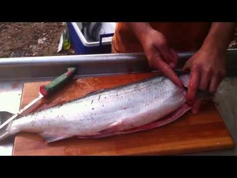 How to break down or process a salmon. Gut, gill, fillet, skin, de-bone.
