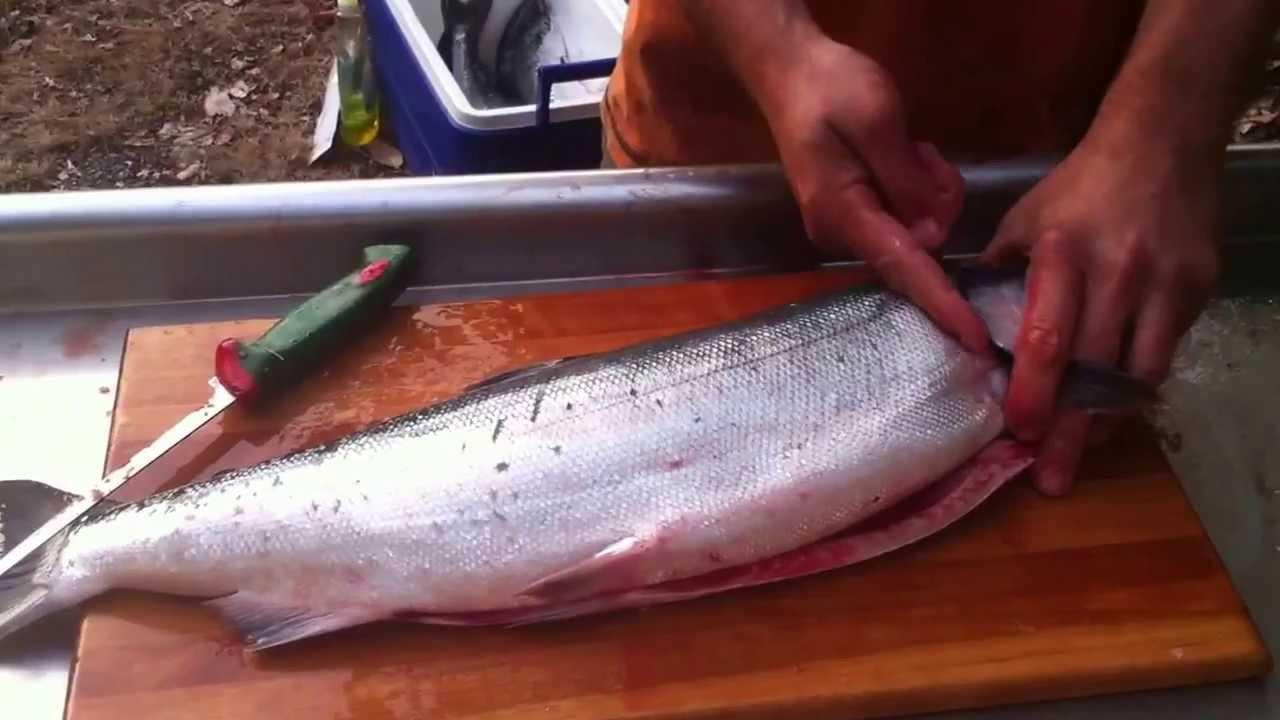 How To Break Down Or Process A Salmon Gut, Gill, Fillet, Skin, Debone   Youtube
