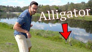 HUGE ALLIGATORS Everywhere! Becoming Gator Bait @ Sweetwater Wetlands Park in Florida
