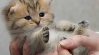 Ежова Котёнок