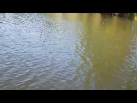 Weird Cicada Lure Destroys Bass!