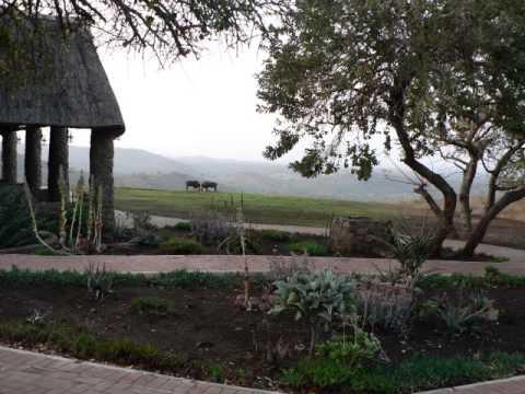 Zulu Nyala African Safari