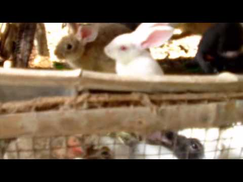ATG  thanh sang ghé thăm trang trại thỏ
