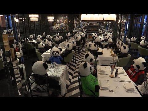 A Francfort, des pandas en peluche remplacent les clients d'un restaurant