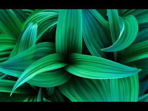 Windows 7 Garden Sound Effects
