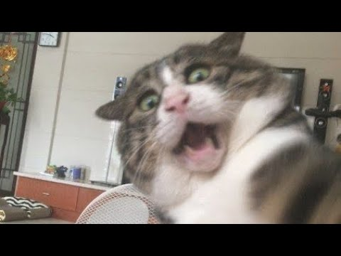 BEST FUNNIEST & CUTEST ANIMALS EVER 😹 – Animal Videos: #47