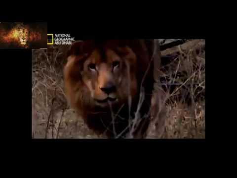 فيلم وثائقي: حين يصبح الصياد فريسة - National Geographic Channel ABU DHABI HD 720P