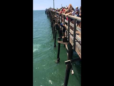 Cash jumps off seal beach pier 2014
