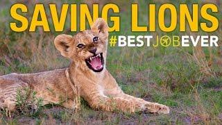 Lion Rapid Response Team | Best Job Ever