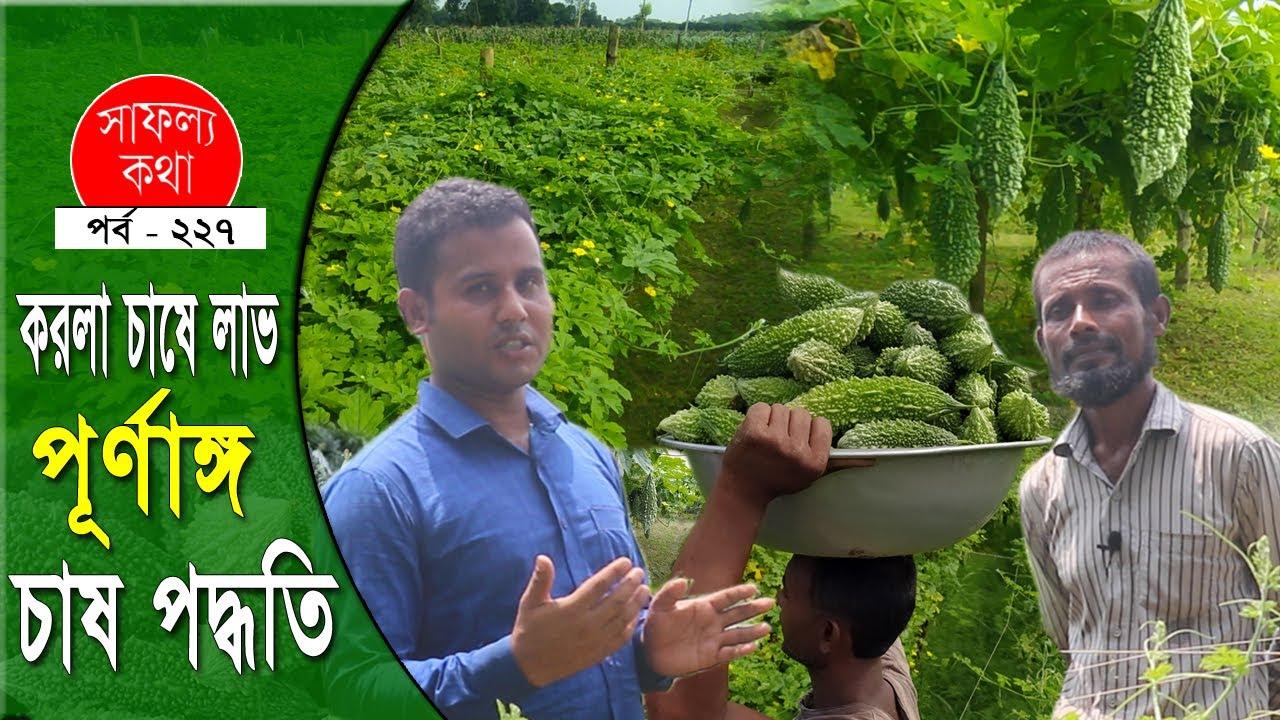 করলা চাষে লাভবান কৃষক | করলার পূর্ণাঙ্গ চাষ পদ্ধতি - Bitter Gourd Farming Methods  | Safollo kotha