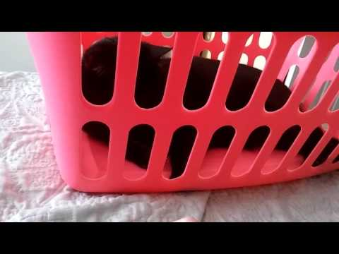Cat plays in a laundry hamper