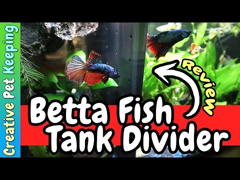 Betta Fish Commuity Tank Divider | REVIEW