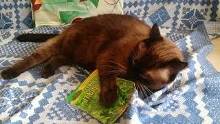 Кот Тиша и итальянская смесь трав
