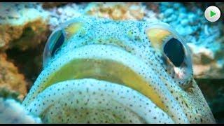 Geheimnisvolle Kreaturen  - Die Erde auf der wir leben - Natur Doku in voller Länge HD 2018