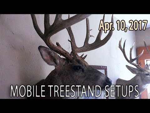 Inside Winke's Trophy Room, How To Hang Stands Fast | Midwest Whitetail