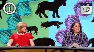 qi which animal has the most genes?
