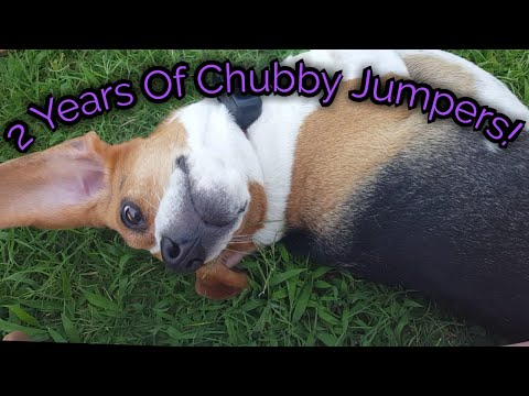 2 Years Of Chubby Jumpers Edit! | Chubby Jumpers