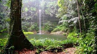TIBETAN Healing Bowls, Birdsongs & Gentle Rain • Stress Relief • Deep Relaxation • Restful Sleep