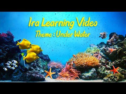 Learn Aquatic Animals for Children | Sea Animals for Kids | Sea Animal Names | Aquatic Animals Video