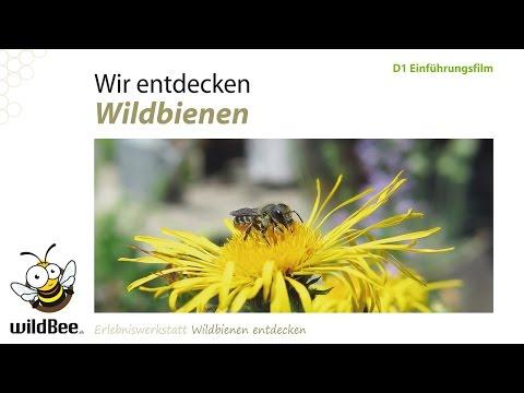 D01 Einführung Wildbienen entdecken