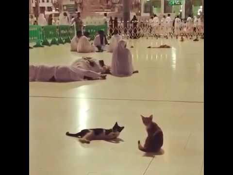 Cat playing in the Grand Mosque