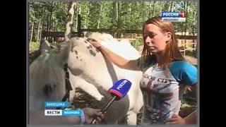 Отрывок репортажа от Вести Иваново о конюшне.